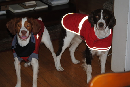 Oudi and Bogey sporting their winter coats